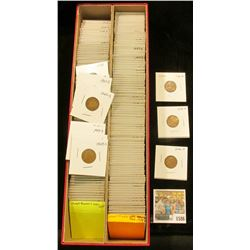 """1586 _ Red 14"""" Double Row Stock Box 90% full of carded, ready for Flea Market 1946-50 Wheat Cents."""