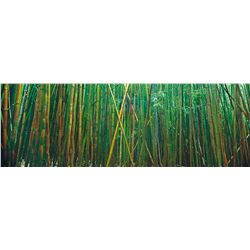 Large 7'11 x 42 Framed Peter Lik - Bamboo Forest Photograph, Artist Proof 42 of 45 (annotation & sig