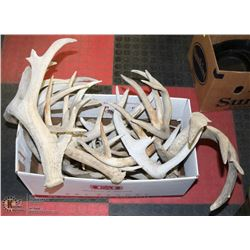 20LBS OF SHED ANTLERS