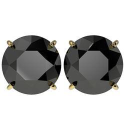 5 CTW Fancy Black VS Diamond Solitaire Stud Earrings 10K Yellow Gold - REF-97W2F - 33147