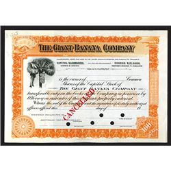 Giant Banana Co. 1900-1920 Specimen Stock Certificate.