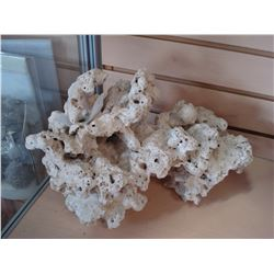 LARGE PIECE OF CORAL