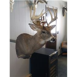 $500 TAXIDERMY CREDIT