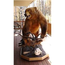 Kodiak Grizzly Bear Mount