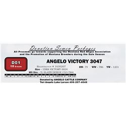 D01 - ANGELO VICTORY 3047