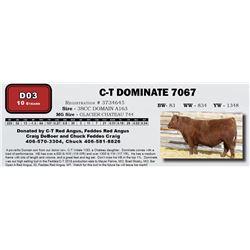 D03 - C-T DOMINATE 7067