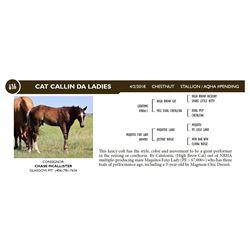 CAT CALLIN DA LADIES