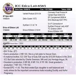 ICC Erica L40-8585