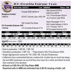 ICC Everelda Entense 7446