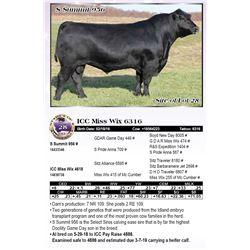 ICC Miss Wix 6316