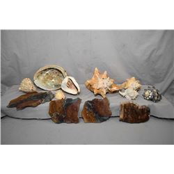 Selection of vintage seashells and rock slices