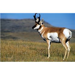 Fully Guided New Mexico Pronghorn Antelope Hunt on Vermejo Park Ranch