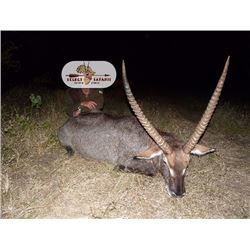 Limpopo Valley Plains game hunt