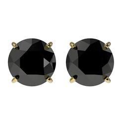 2 CTW Fancy Black VS Diamond Solitaire Stud Earrings 10K Yellow Gold - REF-40A9X - 33085