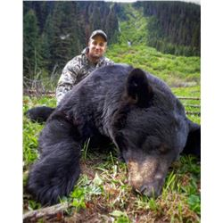 5 Day Spring Black Bear Hunt in the Omineca