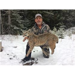 5 Day Bobcat Hunt in Southern BC