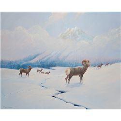 "Cheek, C. R. original oil, Rocky Mountain Sheep, 26"" x 36"""