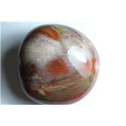 Natural Healing Colorful Petrified Wood 990 Carats