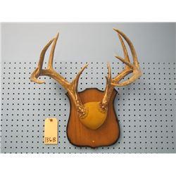 mounted deer horns