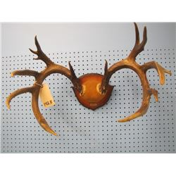 set of deer horns