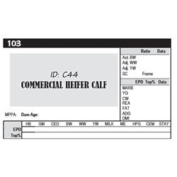 COMMERCIAL HEIFER CALF