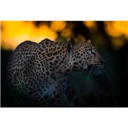 Mike Fell Photography - Leopard