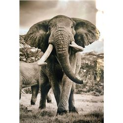 Mike Fell Photography - Elephant 1
