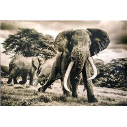 Mike Fell Photography - Elephant 2