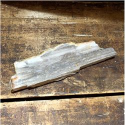 Collectible Piece of Petrified Wood