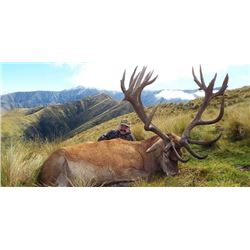 RED STAG AND ARAPAWA RAM HUNT