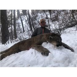 IDAHO MOUNTAIN LION HUNT