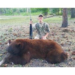 Arizona Black Bear Hunt in the White Mountains