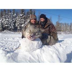 Ontario Canada Winter Wolf Hunt