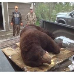 Ontario Canada Fall Black Bear Hunt/Fishing Combo