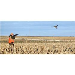 3 Pheasant youth/Mentor Hunt