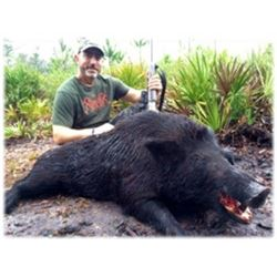 Wild Hog Hunt (With the Optional Use of Bay Dogs) for 4 Hunters
