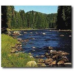 Idaho Black Bear hunt for 2