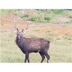 Texas Wild Boar & Sika Stag Hunt, 1 Hunter, 1 Observer