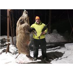 Trophy Boar Hunt in Michigan's Upper Peninsula