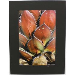 Red Agave, Photographic Print by John Villinski