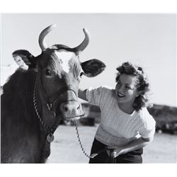 Shirley Temple with pet cow photograph by Andre de Dienes.