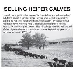 Lot 143 - 10 Heifers
