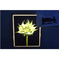 """Two Wes Anderson light box framed botanical still life photographs, each 24"""" X 22"""" overall dimension"""