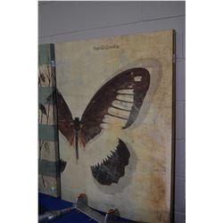 "Stretched canvas print ""Papillo Zenobia"" 30"" X 40"""