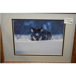 Four framed wildlife prints featuring wolves