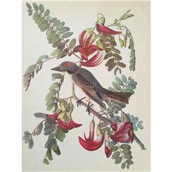 c1946 Audubon Print, #170 Gray Kingbird