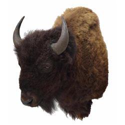 American Bison/buffalo Taxidermy Shoulder Mount