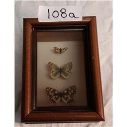 3 Butterflies in Shadow Box