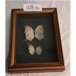 2 Butterflies in Shadow Box