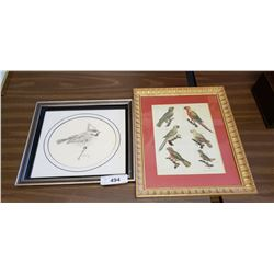 Framed Bird Print & Bird Drawing, Signed S. Lewis/84